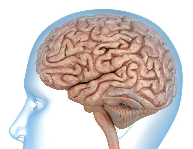 Neuroscientists Likely To Introduce Indian Brain Template