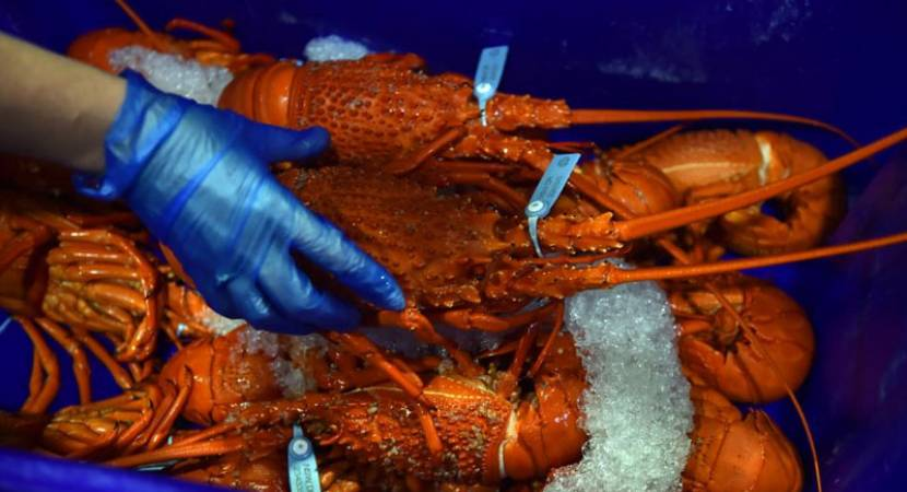 Switzerland to ban live boiling of lobsters in restaurants