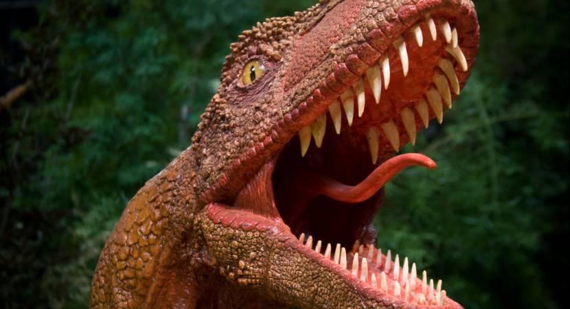 Fossils of new turkey-sized dinosaur found in Victoria