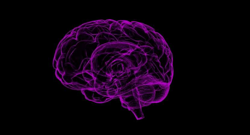 Study: Brain's memory area might be associated with anxiety, depression