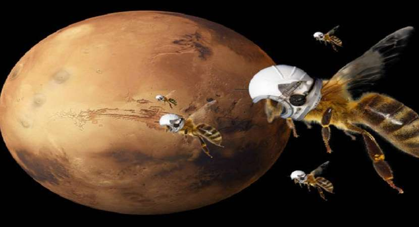 Marsbees, the flying robots the atmosphere on Mars surface