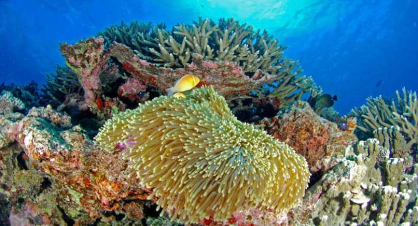 Government pledges $500 million to preserve Great Barrier Reef