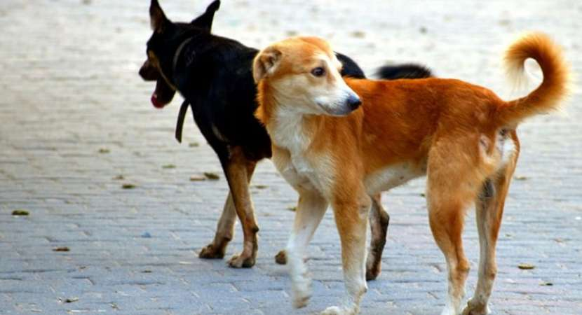 Dogs eat up man's body outside Aligarh morgue, video shakes UP authorities