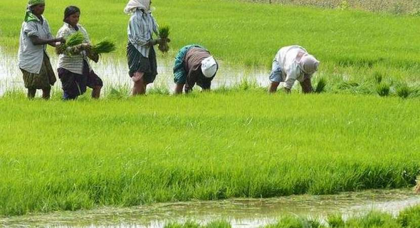 Cabinet approves plan to double farmers' income