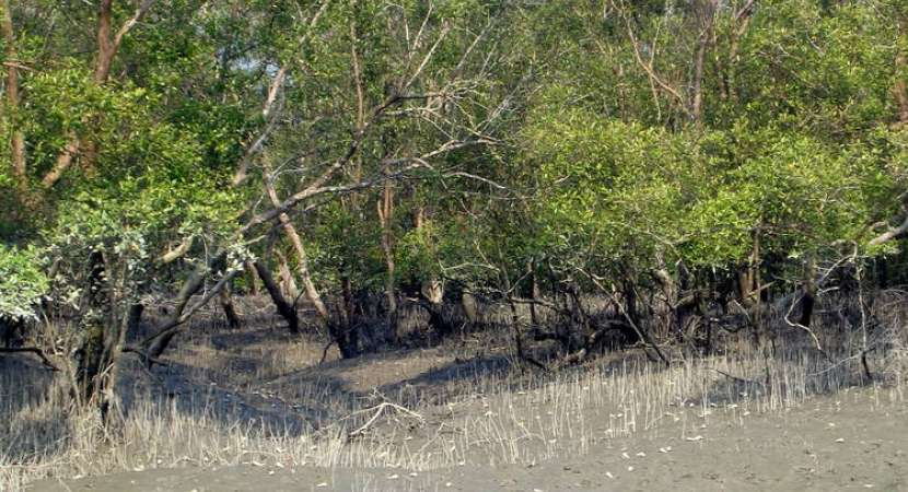 Sundarbans stretches along the Bay of Bengal and considered one of the natural wonders of the world