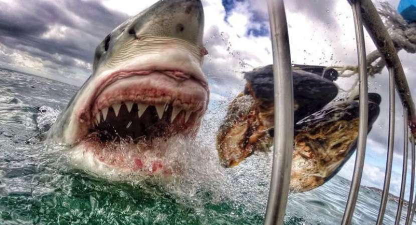 25-million-year old shark tooth found in Australia