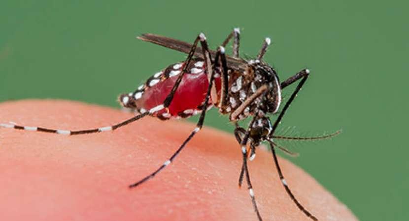 Dengue fever: Symptoms, treatment, and prevention of Dengue fever
