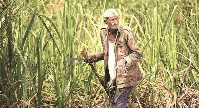 Cabinet approves scheme on remunerative crop prices