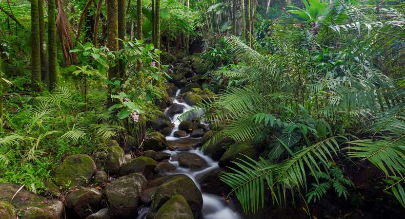 Now, there is major rainforest journalism fund!