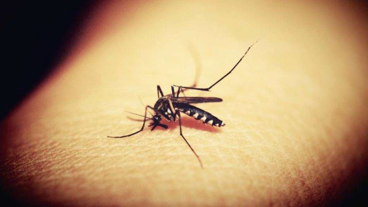 Image result for zika virus india